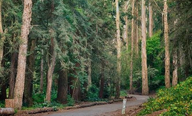 Pine-Lake-Park-13